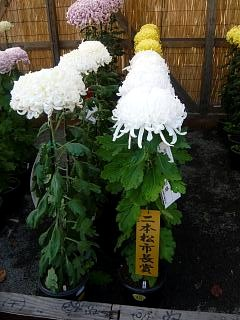 20131109二本松菊人形祭り(その23)