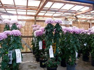 20131109二本松菊人形祭り(その28)