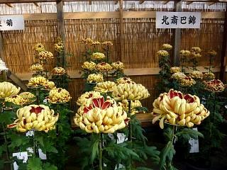 20131109二本松菊人形祭り(その40)