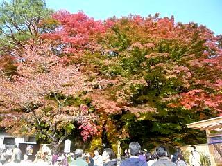 20131109二本松菊人形祭り(その50)