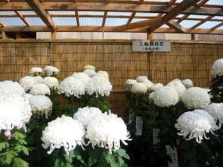20131109二本松菊人形祭り(その51)