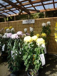 20131109二本松菊人形祭り(その57)