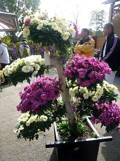 20131109二本松菊人形祭り(その63)