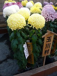 20131109二本松菊人形祭り(その76)