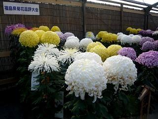 20131109二本松菊人形祭り(その77)