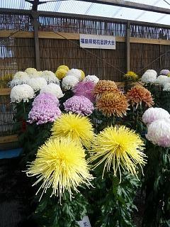 20131109二本松菊人形祭り(その78)