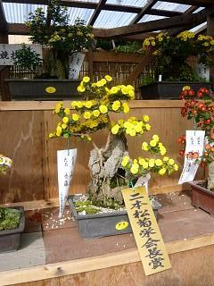 20131109二本松菊人形祭り(その83)