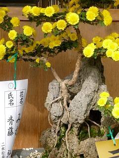 20131109二本松菊人形祭り(その84)