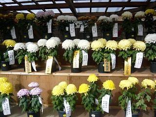 20131109二本松菊人形祭り(その85)