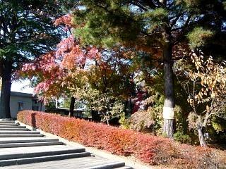 20131117開成山公園(その1)