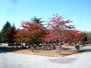 20131117開成山公園(その3)