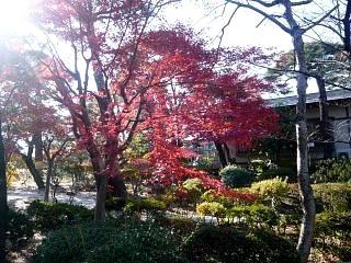 20131117開成山公園(その4)