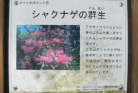 5IMG_6218.jpg