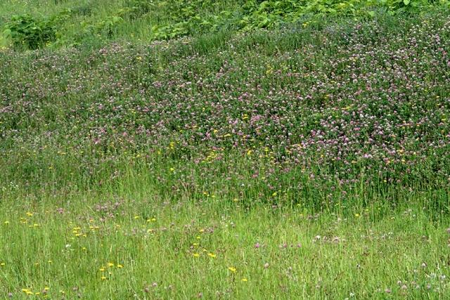 レンゲや白つめ草