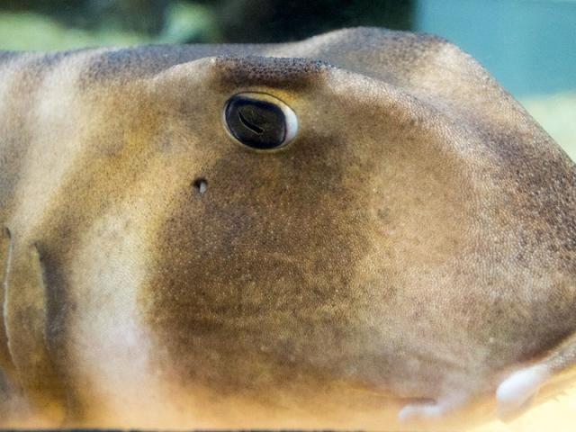 サンピアザ水族館にて