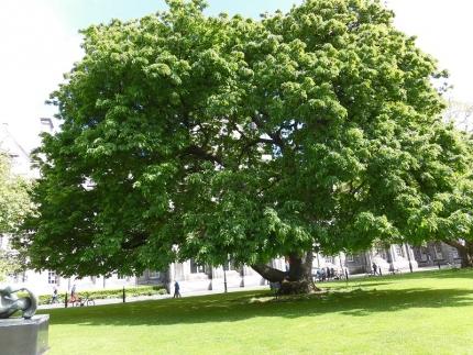 気になる木。