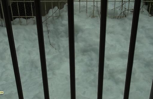 積もった雪