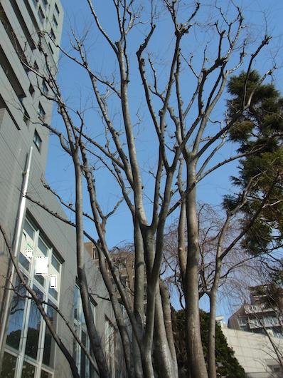 空と木『『三浦や
