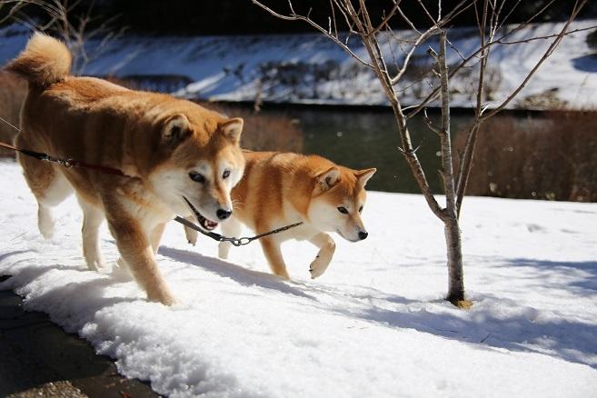 2ワンそろって雪散歩