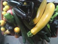 2014,7,31収穫