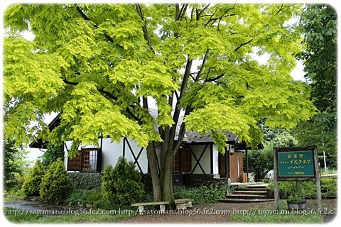 sayomaru10-586.jpg