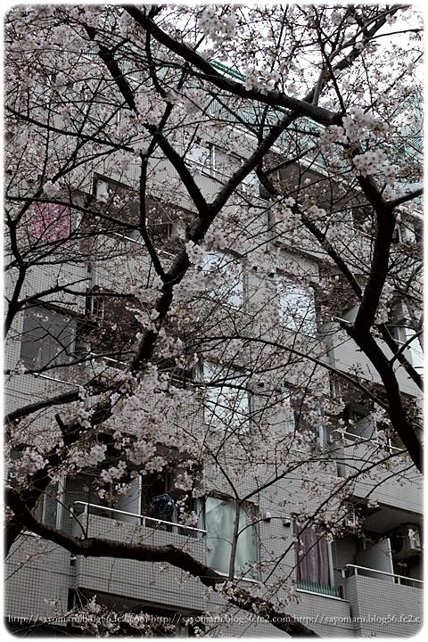 sayomaru9-138.jpg