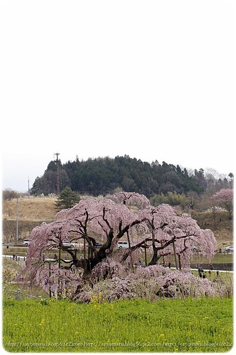 sayomaru9-418.jpg