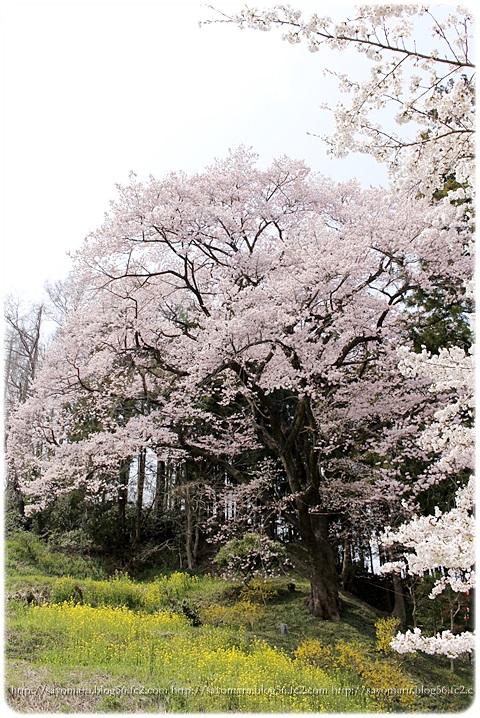 sayomaru9-647.jpg