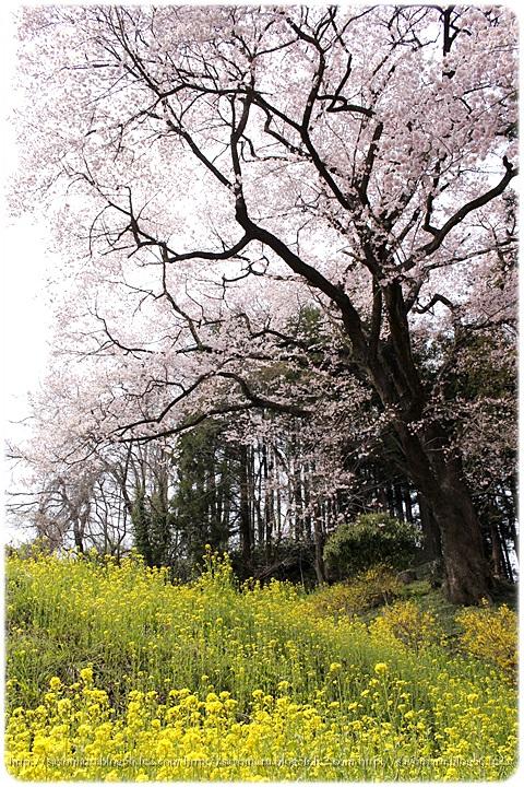 sayomaru9-648.jpg