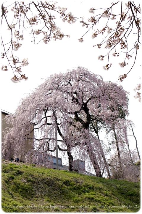 sayomaru9-661.jpg