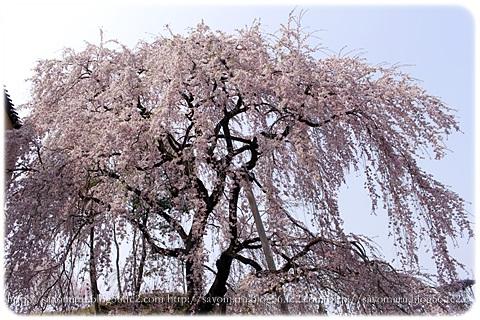 sayomaru9-670.jpg