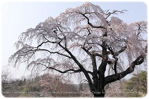 sayomaru9-699.jpg