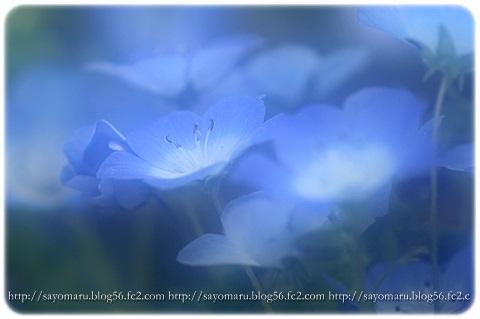 sayomaru9-729.jpg