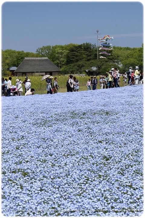 sayomaru9-740.jpg