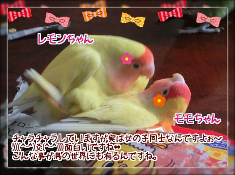モモとレモン