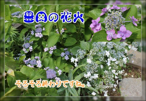 墨田の花火