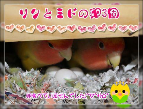 リクミドの卵