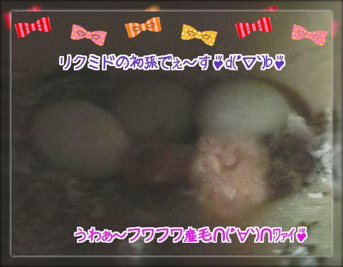 メロンとライムの雛3