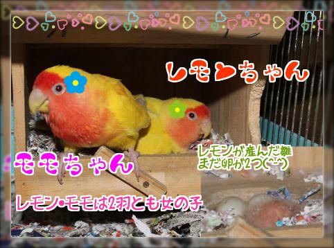 モモ・レモンと雛