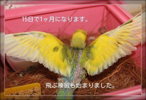 サーヤ飛ぶ練習