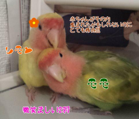 モモとレモン失踪2