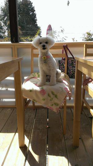 愛知 瀬戸 わんこ 犬  カフェ ランチ おでかけ ドライブ ドックカフェ 有機野菜 スイーツ