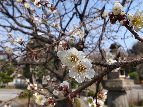2014-03-12 常楽寺 020