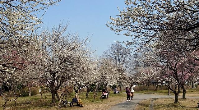 2014-03-12 大宮第二公園の梅 016