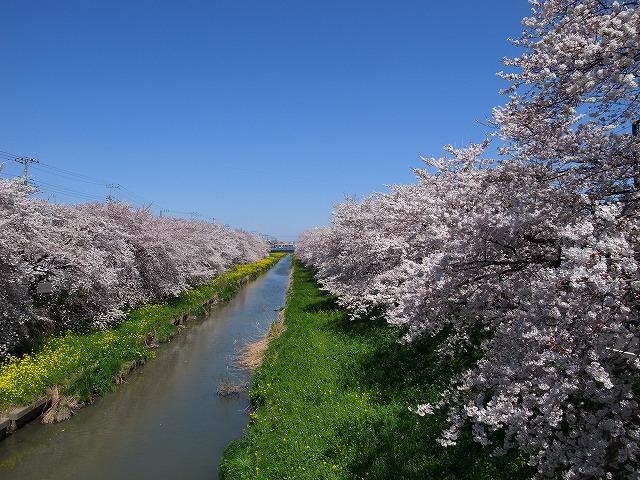 2014-03-31 新河岸川 007