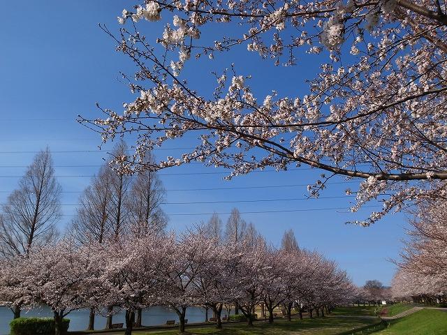 2014-03-31 川越水上公園 002