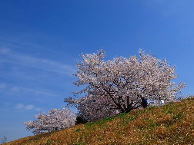 2014-04-02 入間川東上線脇 014