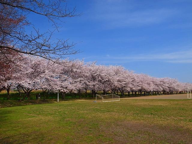 2014-04-02 川越水上公園 028