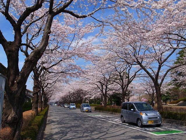 2014-04-02 御伊勢塚公園 023