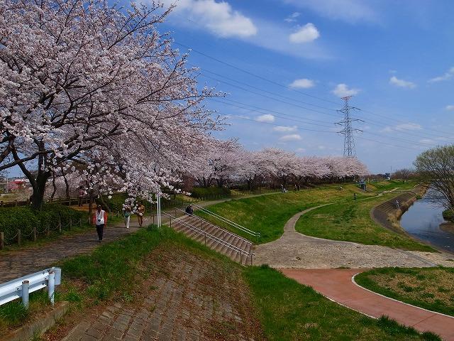 2014-04-02 小畔川桜 006